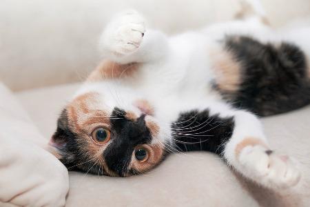 La présence d'un animal de compagnie ne perturbera pas forcément le fonctionnement de votre système d'alarme